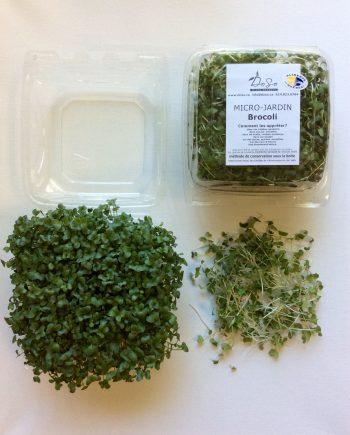 micro-jardin_brocoli